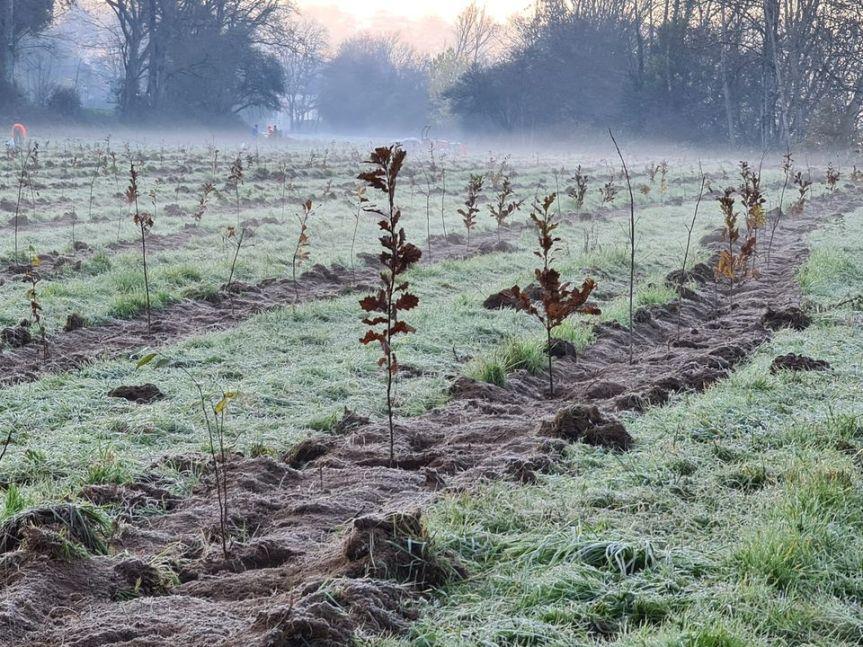 France Forêt Avenir, une asso qui crée desforêts